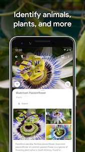 screenshot of Google Lens version Varies with device