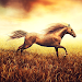 Download Horse Pictures Live Wallpaper 2.7 APK
