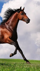 screenshot of Horse Pictures Live Wallpaper version 2.7