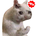 Download New Funny Cat Memes Stickers WAStickerApps 1.4.0 APK
