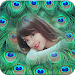 Download Peacock Feathers Photo Frames 1.0.7 APK