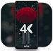 Download Real 4K Wallpapers - Best Quality 1.6.1 APK