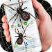 Spider in phone funny joke